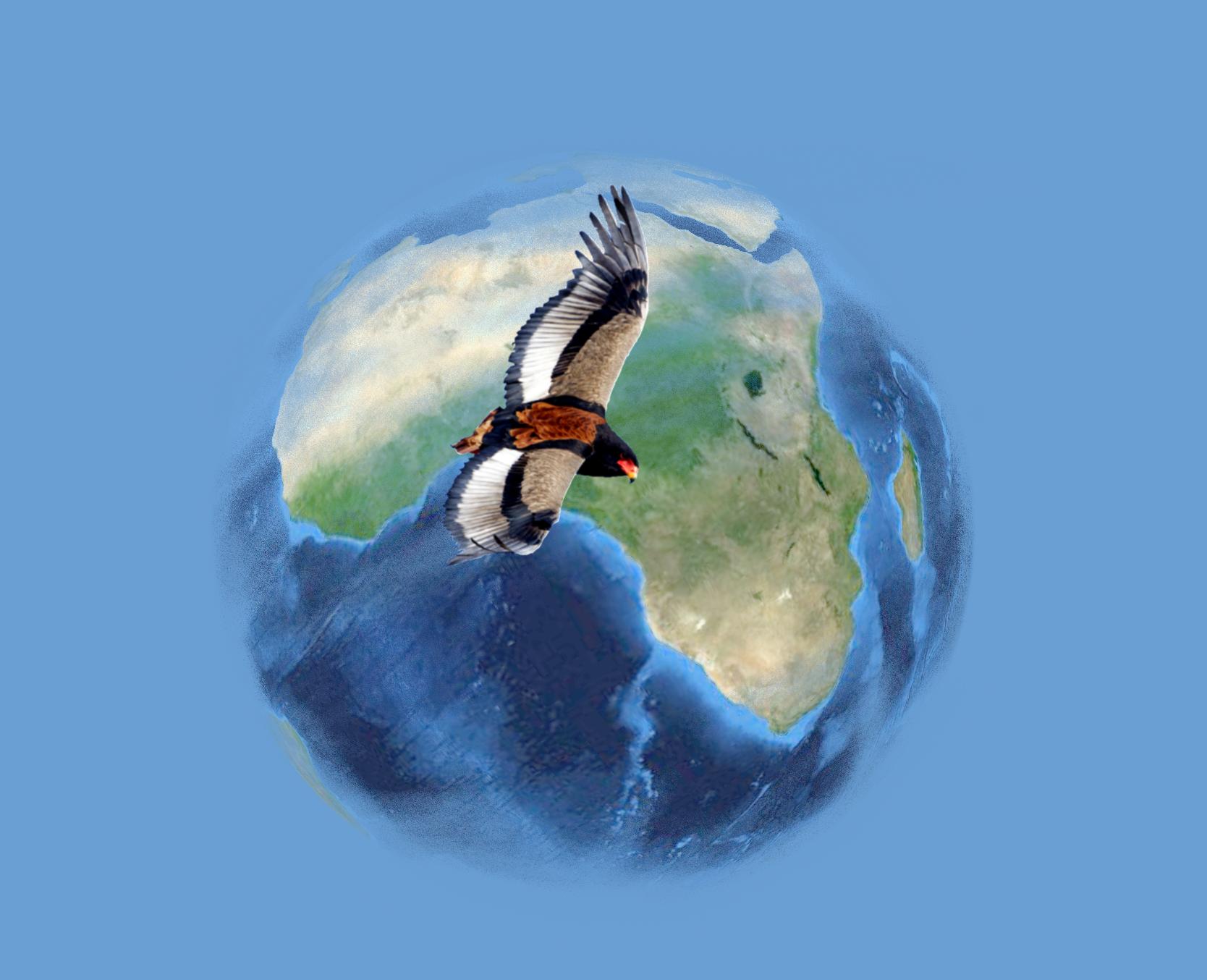African Raptor Databank splash screen: Stu Porter (Bateleur Eagle photo) and Paul MacDermot (splash screen)